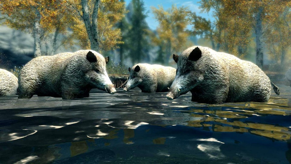 Wild Hogs - Elements of Skyrim | Дикие кабаны